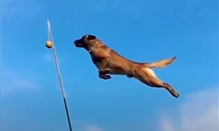 לכלבים החמודים והמצחיקים שבסרטון הזה יש קפיצים ברגליים!