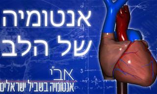 הסרטון הזה יציג בפניכם את האנטומיה המרתקת של הלב