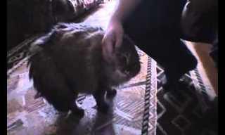 חתול מחקה חתול - קורע!