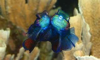 יצורים מדהימים ומסתוריים ממעמקי הים