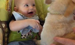 כלבים ותינוקות נפגשים בפעם הראשונה - מתוק!
