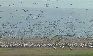 סרטון המתעד את נדידת העגורים ופריחת הנרקיסים בשמורת נוב