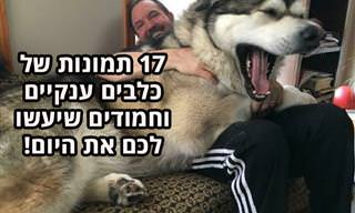 תמונות של כלבים ענקיים, אבל חמודים להפליא עם בעליהם