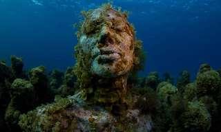 פסלים תת ימיים שהפכו לשוניות אלמוגים חיות