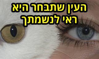 בחן את עצמך: מה העין החייתית שתבחר מעידה עליך?