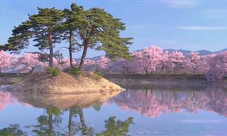 מפה אינטראקטיבית של פלאי הטבע ביפן