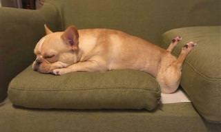 18 כלבים שישנים בתנוחות חמודות ומשעשעות