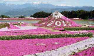 פארק הפרחים הורוד ביפן - מקסים!