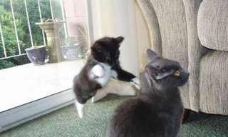 מותק, החתול השתגע - תמונות מצחיקות!