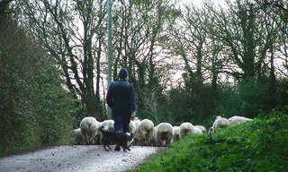 הרועה, הגדי ובאר המים