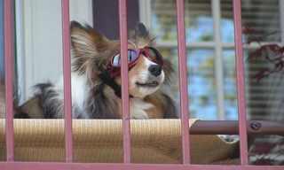 כלבים לוהטים - תמונות שיסנוורו אתכם מצחוק!