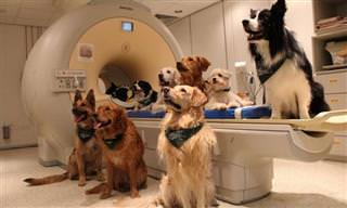 ממצאי מחקר חדש אודות האופן בו כלבים מפרשים דיבור