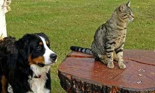 מנהגים שפוגעים בחיות המחמד שלכם