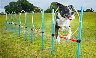 10 הכלבים המקסימים שמחזיקים בשיאי גינס שונים