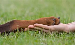 עיסוי נקודות לחיצה בכפות הרגליים לכלבים