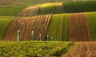 הגבעות הירוקות בחבל מוראביה שבצ'כיה