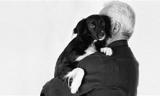 8 דברים שהכלבים שלכם לא אוהבים שאתם עושים