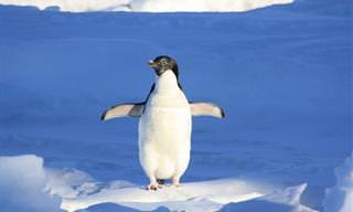 9 סרטוני טבע מדהימים המתעדים חיות בר בסביבת מחייתם הטבעית