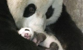 היופי והאהבה שבמשפחות ממלכת הטבע