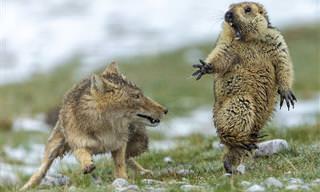 16 תמונות טבע מדהימות של חיות בר