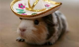 14 תמונות מתוקות של בעלי חיים שיזכירו לכם לשים כובע על הראש