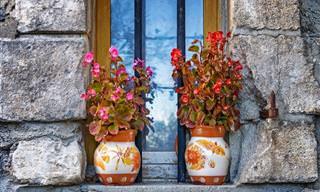 הכירו את 8 הצמחים ההיפו-אלרגניים שישפרו את איכות החיים שלכם