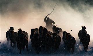 אלו הן התמונות הזוכות בתחרות של נשיונל ג'יאוגרפיק, לשנת 2016