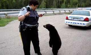 תמונות מצחיקות מחייהם של שוטרים