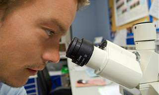 מה למדו החוקרים על גוף האדם בשנת 2015