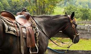 סיפור עם קלאסי - דאגר, נאבכ והסוס