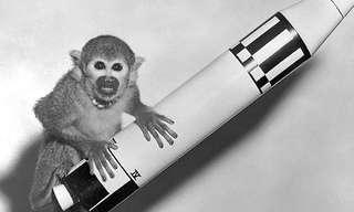 בעלי החיים שסללו לנו את הדרך לחלל