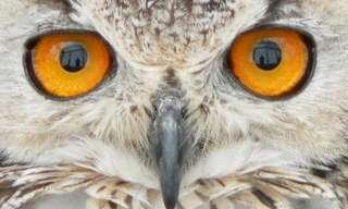העיניים המופלאות ביותר בממלכת החיות