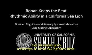 אריה-ים רוקד לצלילי מוזיקה - מדהים!