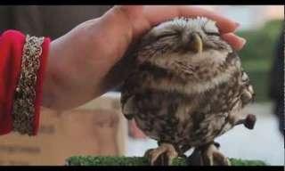 הרמוניה של אדם וטבע - סרטון מדהים!