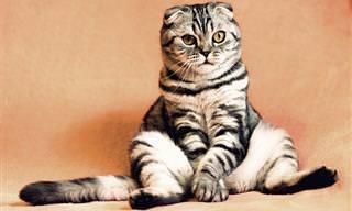 אוסף סרטוני החתולים המשעשעים הזה יעלה חיוך על פניכם...