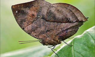 התחפושות המדהימות של החרקים