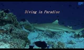 ביקור קצר בגן עדן: הצטרפו למסע צלילה מרהיב באיים המלדיביים