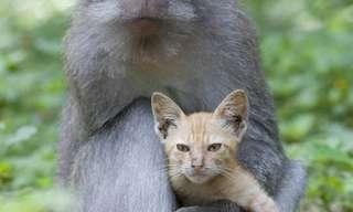 קופים וחתולים - השילוב האהוב!