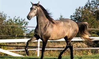 10 זנים מיוחדים של סוסים