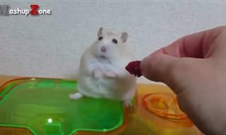 הסרטון הזה יגרום לכם להתאהב בחיות הכי קטנות וחמודות בעולם!