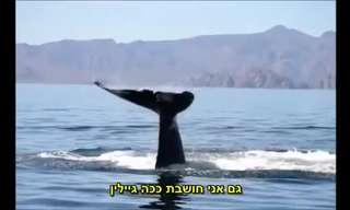 חילוץ לוויתן וריקוד התודה שלו - מדהים!
