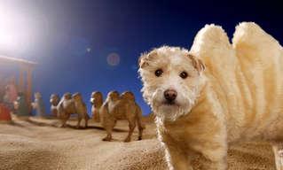 ראגל הכלבלב שמתחפש בכל שנה