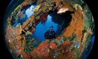 התמונות היפות ביותר לשנת 2018 שצולמו מתחת למים