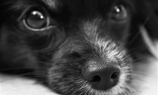 זהו הסימן המובהק ללחץ בקרב כלבים