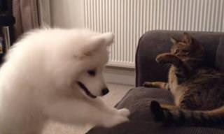 כלב וחתול הופכים לחברים