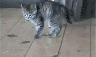 שיגעון של חתולים - אוסף פספוסים מצחיק!