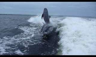 דולפינים מתנגשים באוויר - מצחיק!