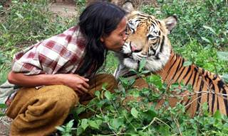 סרטון מרגש על הקשר המיוחד שיש בין חיות בר לבני אדם