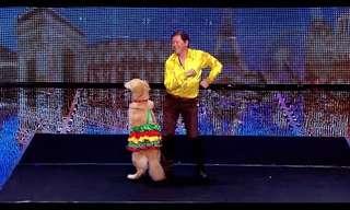 הכלב שרוקד ריקודים לטיניים