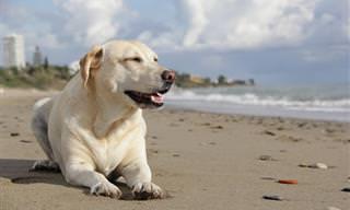 בעיות בריאותיות ומידע חשוב על גזעי הכלבים הנפוצים בישראל
